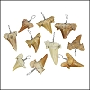 Large Moroccan Shark Teeth - Silver Wired - 25 pcs