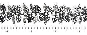 birch leaf dangles chain GUNMETAL - per 25ft spool